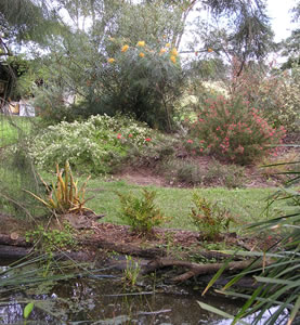 Australian native plants societyaustralia garden design for Australian native garden design ideas